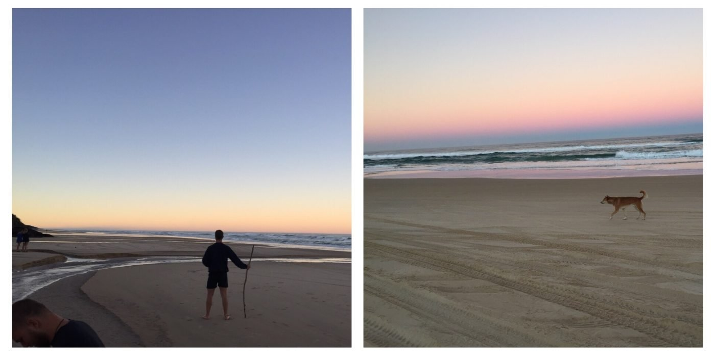 Sunset on the beach with a dingo walking past