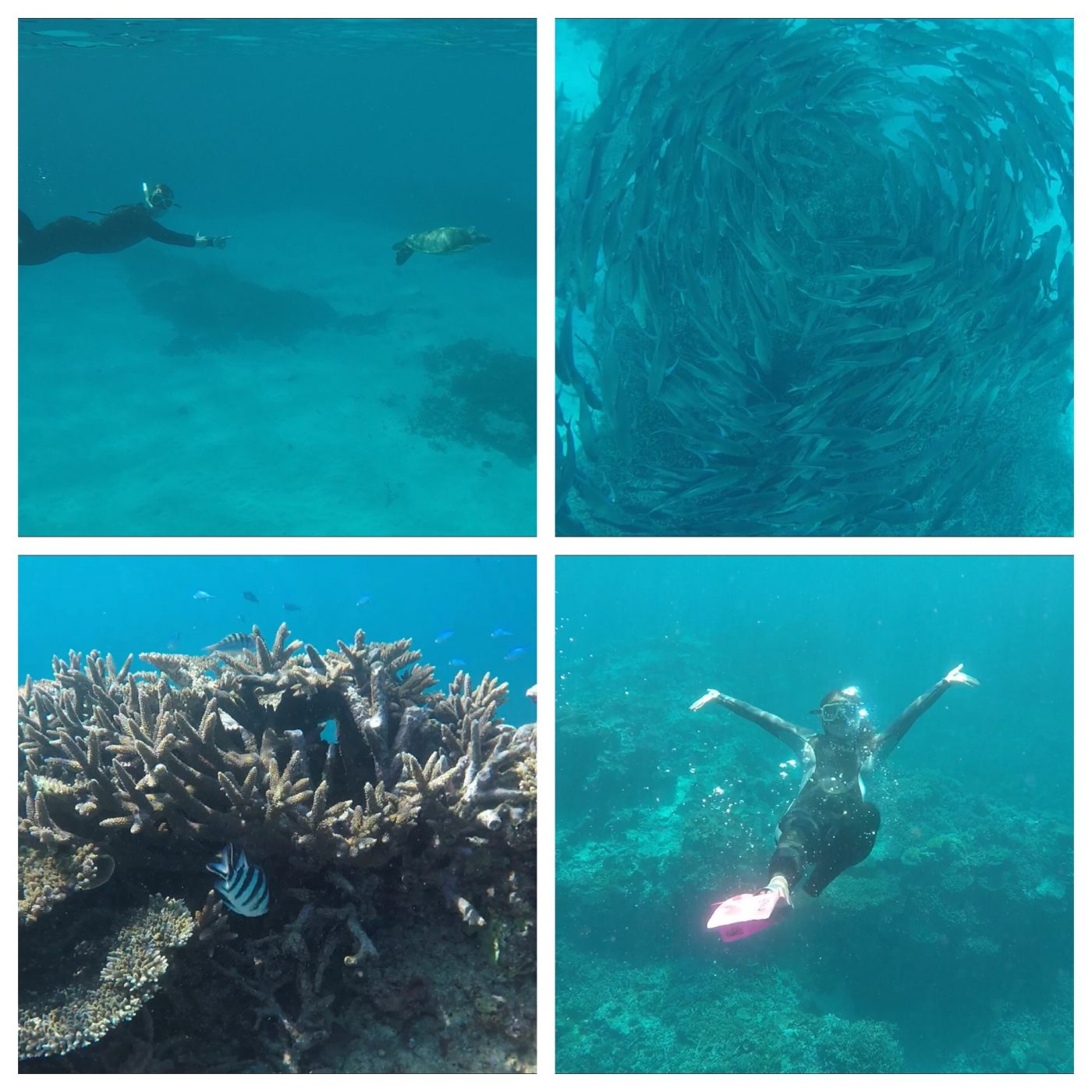 Swimming with turtles, trevally and other colourful fish