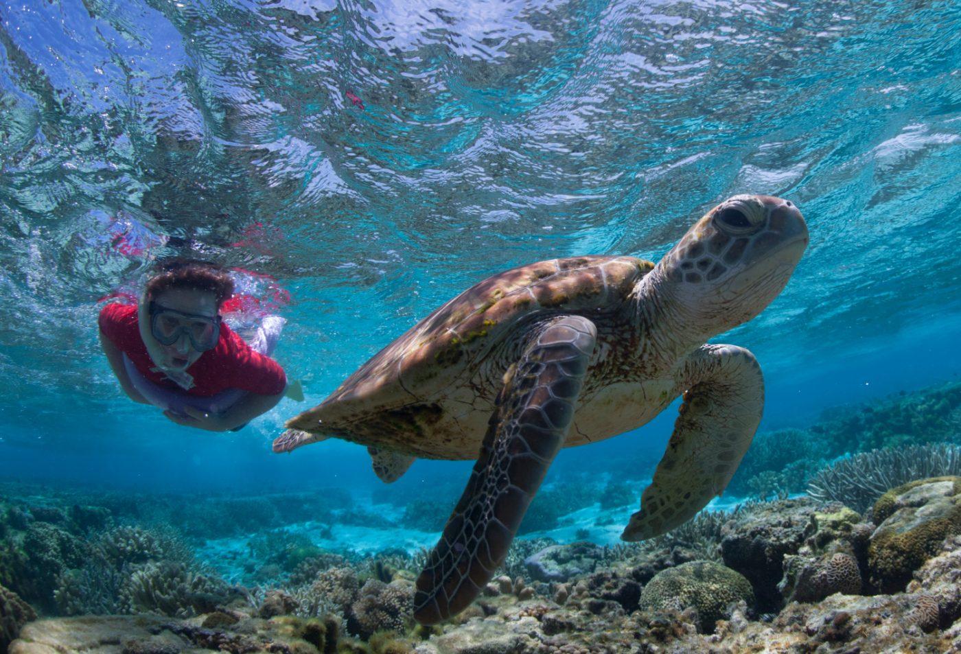 lady-elliot-island-great-barrier-reef