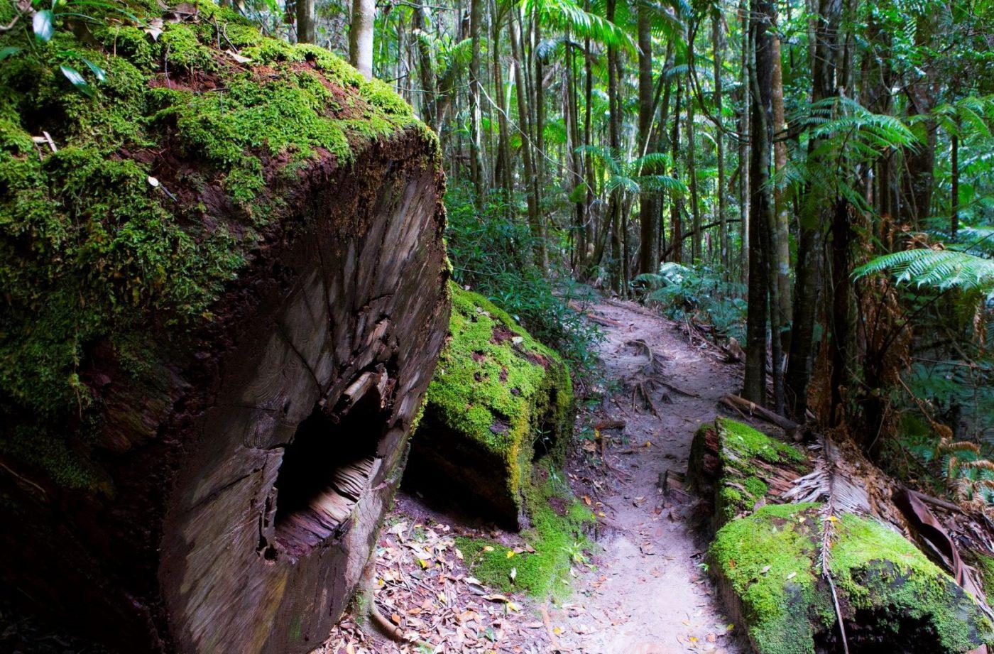 fraser-island-hiking