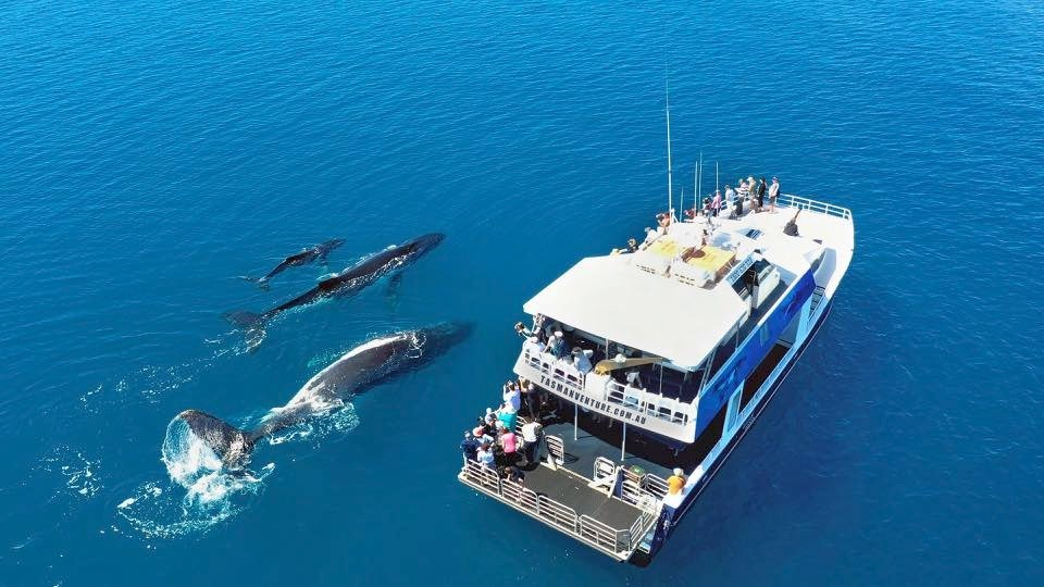 tasman-venture-whale-watch